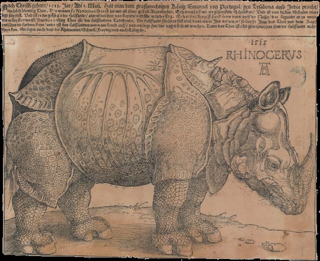 rinoceronte-durero-1515